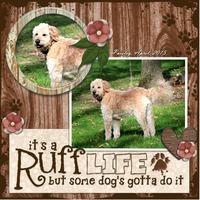 Ruff Life (2)