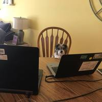 Dolly working from home