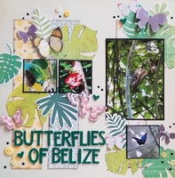 Butterflies of Belize