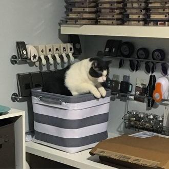 Non-crafting Scrappy Storage