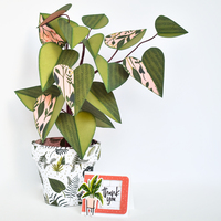 Paper Philodendron