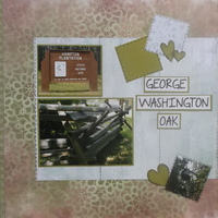 George Washington's Oak