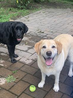 Happy National Dog Day 2020