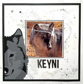 Keyni