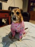 Penny wearing her new PJs
