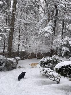 Twinkie & Sky Snow Feb 2021