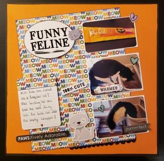 Funny Feline