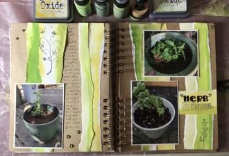 """""""Herb"""" Garden"""