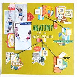 anatomy of a boy brain