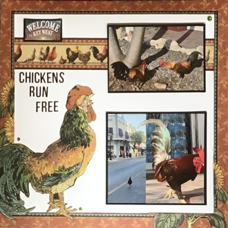 Chickens run free