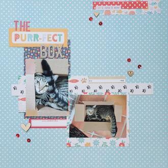 The Purr-fect Box