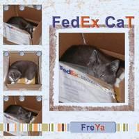FedEx Cat
