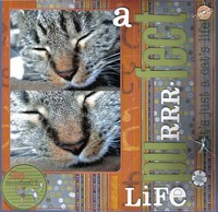 a purrrfect life