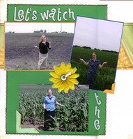 Let's Watch The Corn Grow!