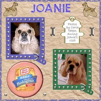 Joanie my Bologna companion page