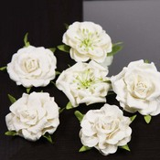 Marshmellow Lilliput Roses by Prima