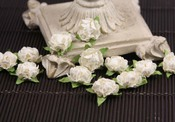 White Cameo Roses by Prima