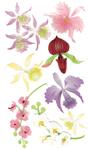 Colorful Orchids 3D  Stickers - Jolee's Boutique