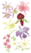 Colorful Orchids 3D  Stickers - Jolee's Boutique