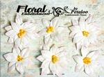 White Poinsettia Blossoms Petaloo Canterbury Collection