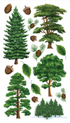Majestic Trees Sticko Stickers