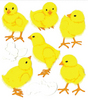 Baby Chicks Stickers - Jolee's Boutique