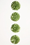 Green Pom Pom Flower Stickers - Fluerettes - Mark Richards