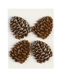 Glittered Edge Pine Cones - Dimensional Stickers - Jolees