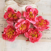 Bel Canto Flowers Set A - Prima