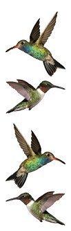 Hummingbirds Photoessence Stickers - Mrs. Grossmans