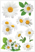 Oxeye Daisy 3D Stickers - Paperhouse