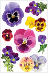 Pansies 3D Stickers - Paperhouse