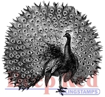 Peacock Rubber Stamp - Deep Red Stamps