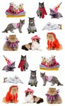 Pampered Cat Stickers - Mrs. Grossmans