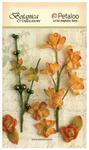 Amber Floral Ephemera - Petaloo