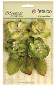 Pistachio Botanica Blooms - Botanica Collection - Petaloo