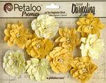 Teastained Yellow Dahlias