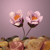 "Burgundy Paper Scallop Praire Flowers, 1-1/8"""