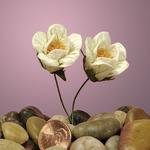 """Ivory Paper Prairies 1-1/8"""" Flowers"""