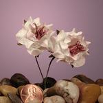 "Pink Stargaze Wildflower Bouquet 1 1/8"" Paper Flowers"