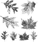 Falling Leaves - Tim Holtz Cling Rubber Stamp Set
