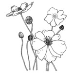 Poppies - Penny Black Mounted Rubber Stamp