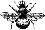 Queen Bee - Donna Salazar Cling Stamp