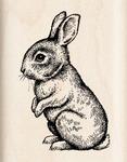 Baby Bunny - Inkadinkado Mounted Rubber Stamp