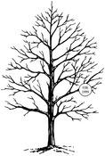 Winter Tree - Judikins Rubber Stamp