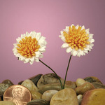 Mini Tansy Wildflowers 7/8""