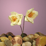 "Ivory Paper Wildflowers 1"""