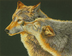 "14""X11"" 14 Count - Wolf Kiss Counted Cross Stitch Kit"