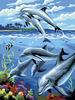 "Dolphins - Junior Small Paint By Number Kit 8.75""X11.75"""
