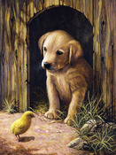 "Labrador Puppy - Junior Small Paint By Number Kit 8.75""X11.75"""